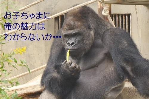 060_20161119194746ac3.jpg