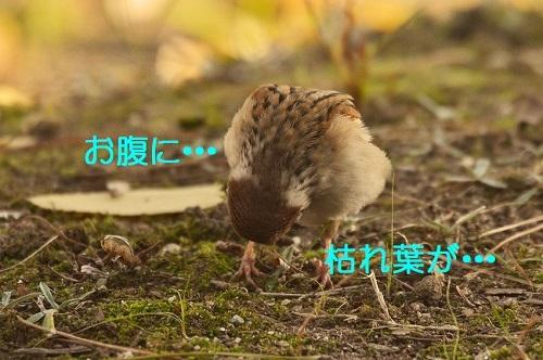 060_2016120819244395e.jpg