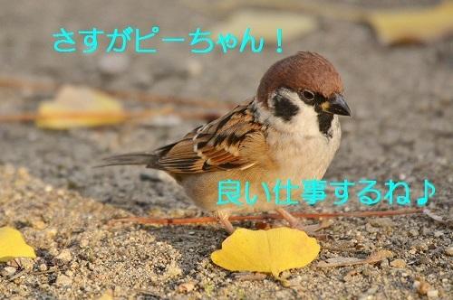 060_20161216200900ae8.jpg