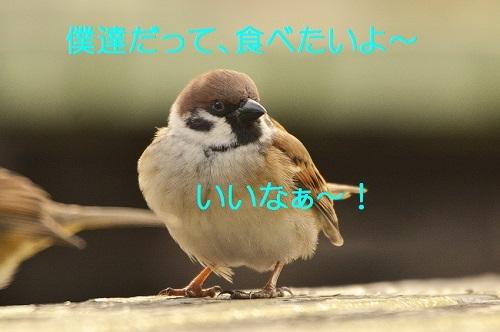 060_201612251927160ef.jpg