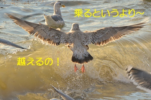 060_201701082034047ab.jpg