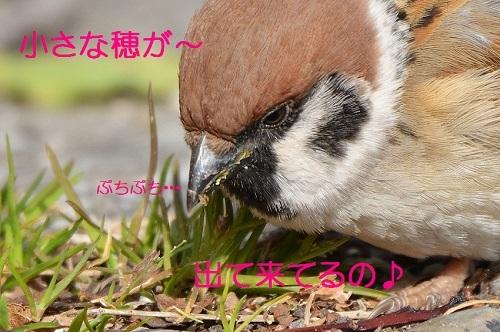 060_20170210175157e9a.jpg