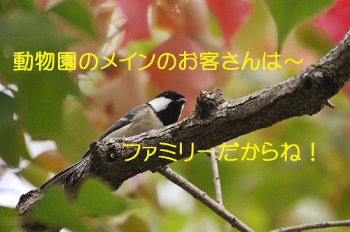 070_201611191947475ca.jpg