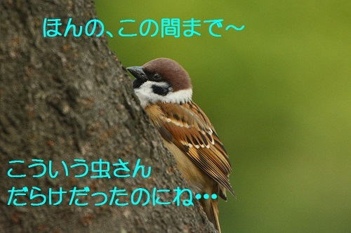 070_20161120210600ad8.jpg