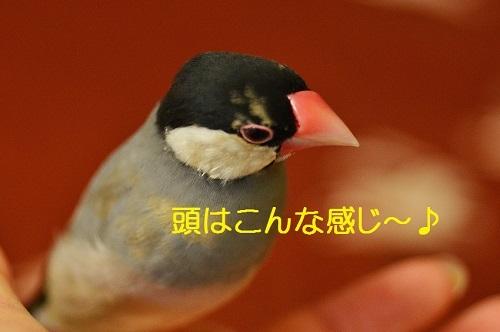 070_201612021930009d2.jpg