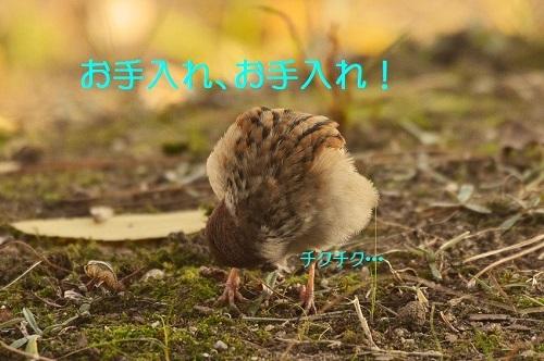 070_20161208192445fa0.jpg
