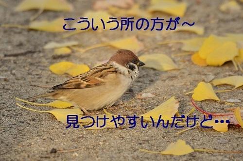 070_20161209200241b82.jpg