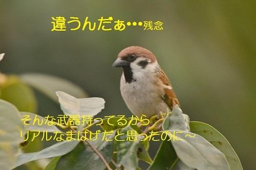 070_20170103191401ec0.jpg