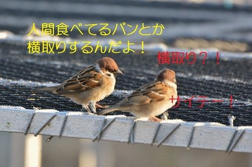 070_201701052016069e3.jpg
