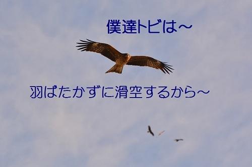 070_201701071329566d1.jpg