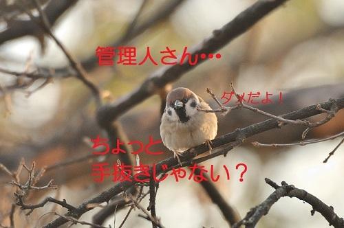 070_201701222236564c4.jpg