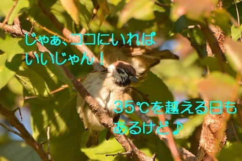 080_2016111222145655d.jpg