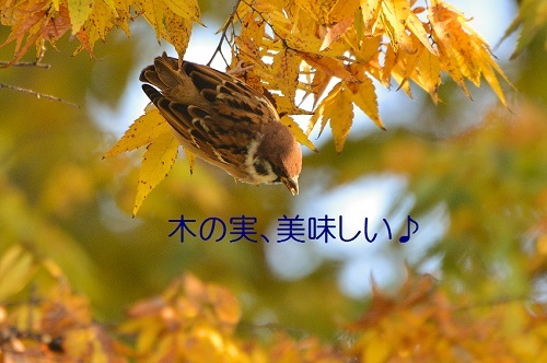 080_20161204235050b9f.jpg