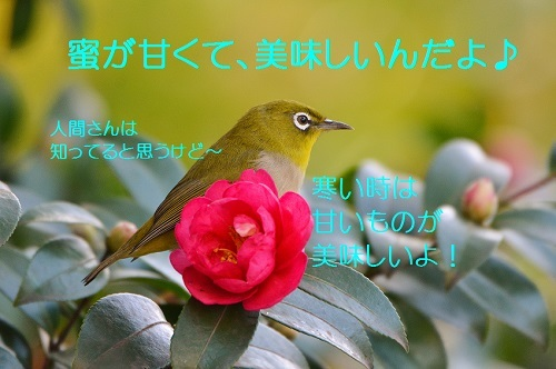 080_2016121220024073e.jpg