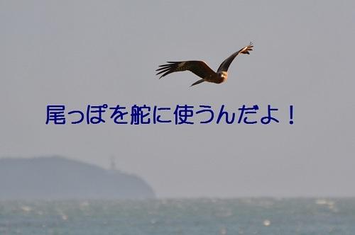 080_20170107132957a7b.jpg