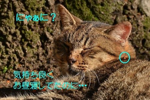 090_20161218210630cb9.jpg