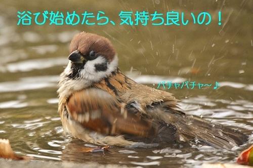 090_20161226194024fd7.jpg