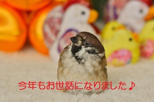 090_20161230205850cd1.jpg
