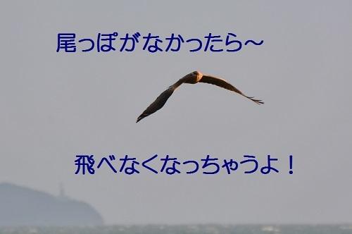 090_20170107132958d8e.jpg