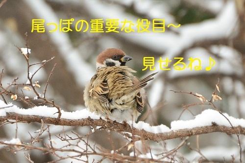 090_201701251942514c6.jpg