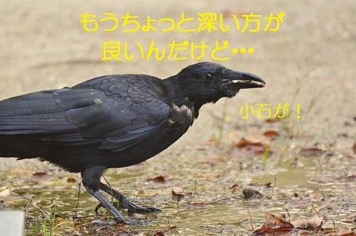 100_20161110203022b33.jpg
