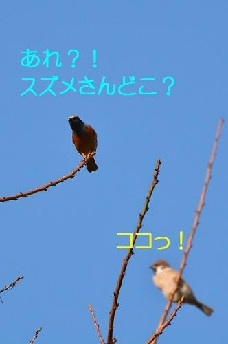 100_20161114185148535.jpg