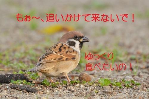 100_20161130180015448.jpg