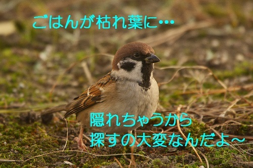 100_20161208192449a07.jpg