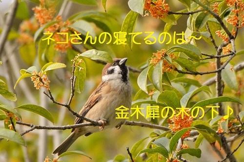 100_20161218210632a20.jpg