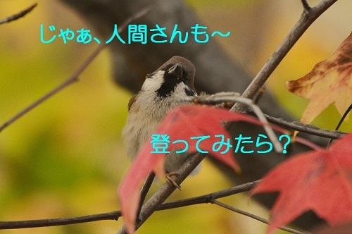 100_20161219202328589.jpg