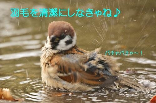 100_20161226194025795.jpg