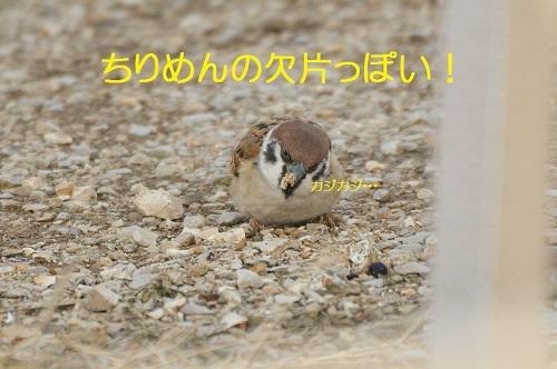 100_20170104200831ba1.jpg