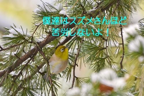 100_201701152109207df.jpg