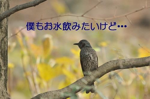 100_201701201914587c3.jpg