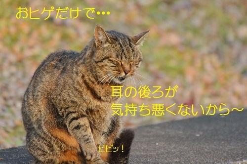 100_20170123180602932.jpg