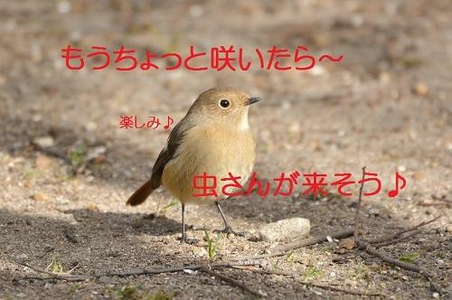100_20170211194406c68.jpg