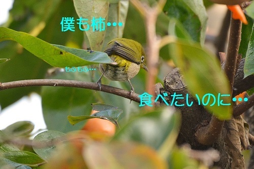 110_2016112519285095a.jpg