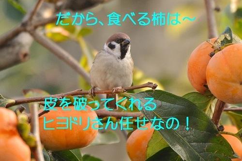 110_20161126223932564.jpg