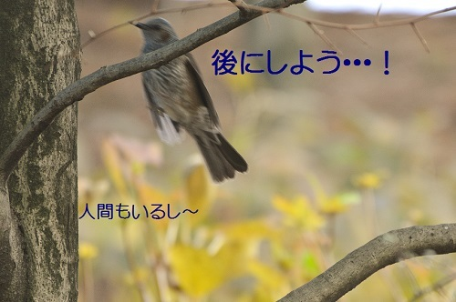 110_201701201915522a4.jpg