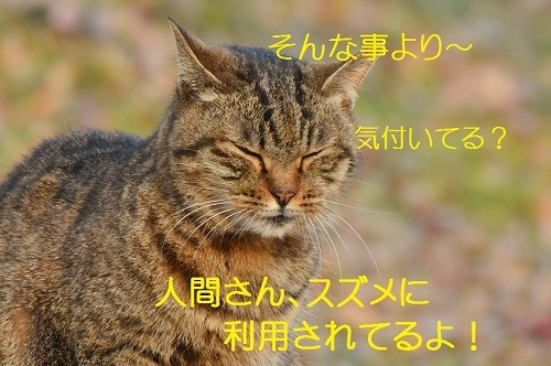 110_201701231806339bb.jpg