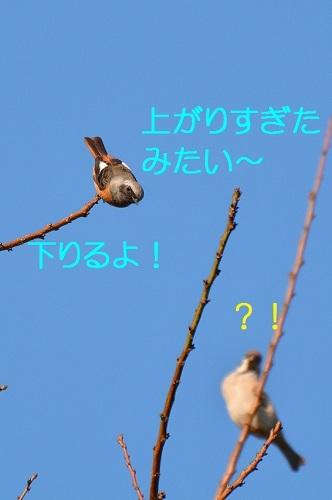 120_20161114185232562.jpg