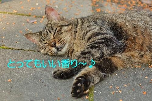 120_201612182108368d8.jpg