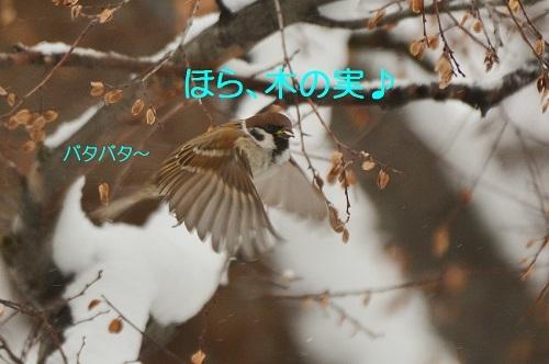 120_201701251944301ad.jpg