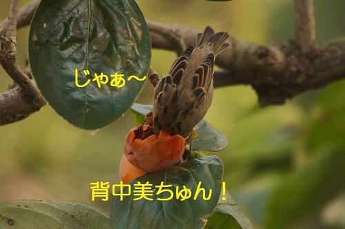 130_20161125193044886.jpg