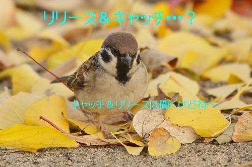 130_20161211225337dd5.jpg