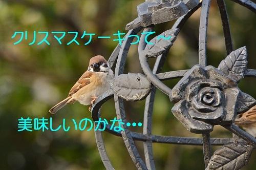 130_201612242102313a4.jpg