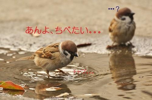 130_201612261942201f5.jpg