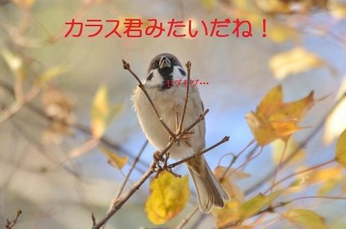 130_201612281957216b3.jpg