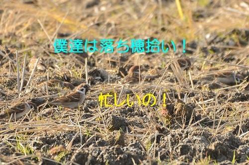 130_20161229195855f7e.jpg