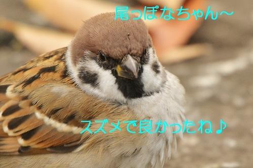 130_201701071331338e6.jpg